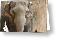 Sad Elephant Greeting Card