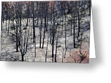 Sad Forest Greeting Card