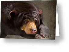 Sad Sun Bear Greeting Card