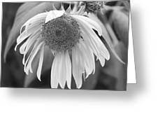 Sad Sunflower Black And White Greeting Card