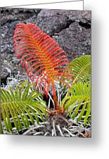Sadleria Fern Hawaii Greeting Card