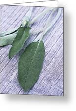 Sage Leaves Greeting Card