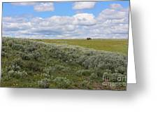 Sagebrush And Buffalo Greeting Card