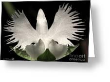 Sagi-so Or Crane Orchid Greeting Card