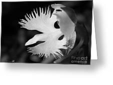 Sagi-so Or Crane Orchid Named Japanese Egret Flower Greeting Card
