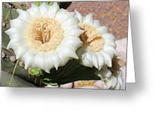 Saguaro Cactus Flowers Greeting Card