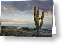 Saguaro Carnegiea Gigantea Cactus Greeting Card