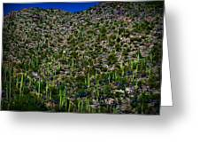 Saguaro Foothills Greeting Card