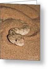 Sahara Sand Viper Cerastes Vipera Greeting Card