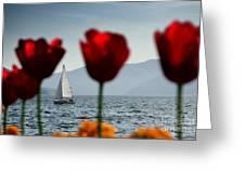 Sailing Boat And Tulip Greeting Card