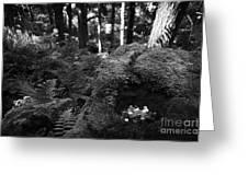 Saint Patricks Well Altadaven Favor Royal Forest Bullaun Stone County Tyrone Ireland Greeting Card by Joe Fox