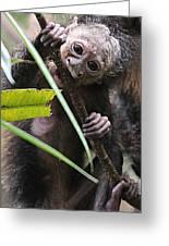 Sak-monkey Greeting Card