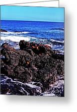 Sally Lightfoot Crabs On Basalt Greeting Card