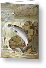 Salmon, C1900 Greeting Card