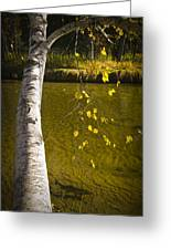 Salmon During The Fall Migration In The Little Manistee River In Michigan No. 0887 Greeting Card
