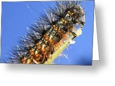 Salt Marsh Caterpillar Greeting Card