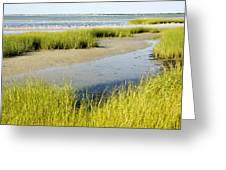 Salt Marsh Habitat With Flock Of Birds Greeting Card
