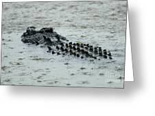 Salt Water Crocodile 3 Greeting Card