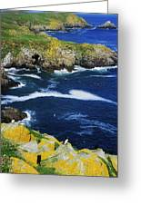 Saltee Islands, Co Wexford, Ireland Greeting Card