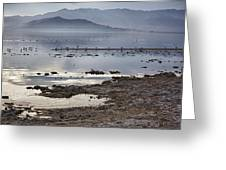 Salton Sea Birds Greeting Card