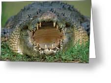 Saltwater Crocodile Crocodylus Porosus Greeting Card