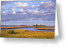 Saltwater Marshes At Cedar Key Florida Greeting Card by Tim Fitzharris