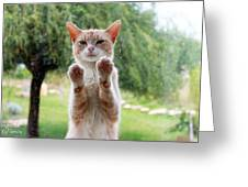 Salute Cat Greeting Card