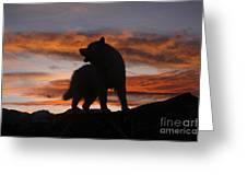 Samoyed At Sunset Greeting Card