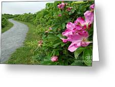 Sanctuary Pathway Greeting Card