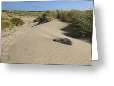 Sand And Grass Dunes Greeting Card