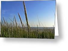 Sand Dune Grasses Greeting Card