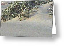 Sand Dune Greenery Greeting Card