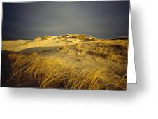 Sand Dunes And Beach Grass In Golden Greeting Card