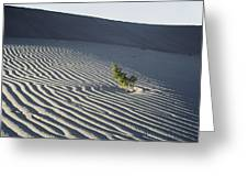 Sand Dunes, Death Valley, California Greeting Card
