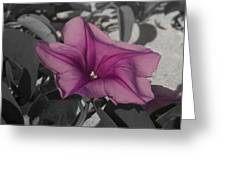 Sand Flower Greeting Card