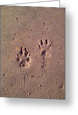 Sand Paws Greeting Card