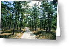 Sand Road Through The Pine Barrens, New Greeting Card