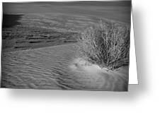 Sand Shrub 3 Greeting Card