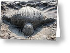 Sand Turtle Greeting Card