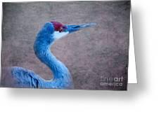 Sandhill Crane 3 Greeting Card