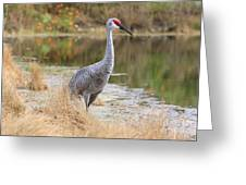 Sandhill Crane Beauty By The Pond Greeting Card