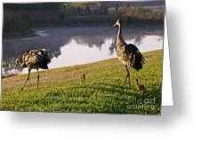 Sandhill Crane Family Fun Greeting Card