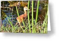 Sandhill Crane Hatchling Greeting Card by Lynda Dawson-Youngclaus
