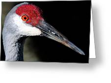Sandhill Cranes Close Up Greeting Card