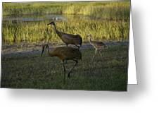 Sandhill Cranes Family Greeting Card