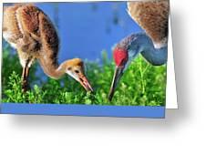 Sandhill Cranes Having Breakfast Greeting Card