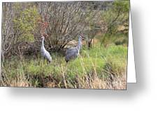 Sandhill Cranes In Colorful Marsh Greeting Card