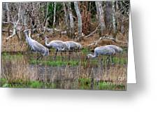Sandhill Cranes In The Winter Marsh Greeting Card