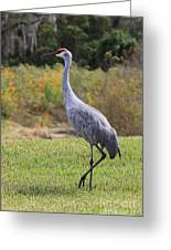 Sandhill In The Grass With Wildflowers Greeting Card