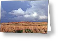 Sandhill Skies Greeting Card